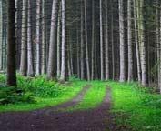 Put u sumu