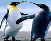 Ples pingvina